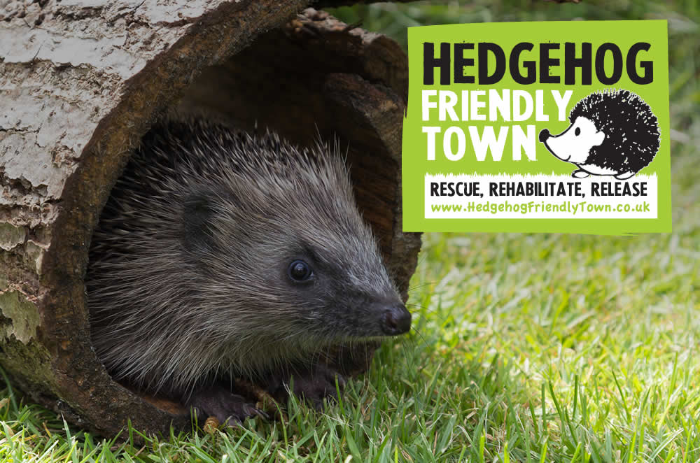 Hedgehog Friendly Town